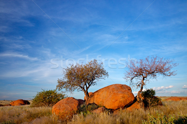 Granite boulders and trees Stock photo © EcoPic