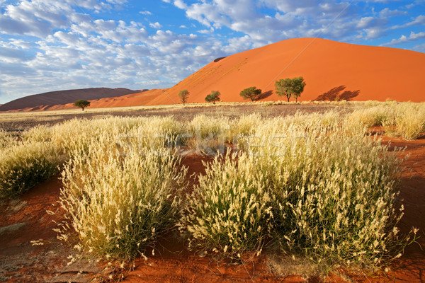 трава дюна небе пейзаж пустыне песчаная дюна Сток-фото © EcoPic