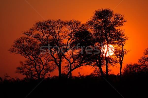 África sabana puesta de sol árbol Sudáfrica naturaleza Foto stock © EcoPic