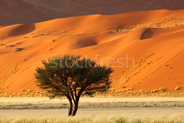 Tree, dune and grass landscape Stock photo © EcoPic
