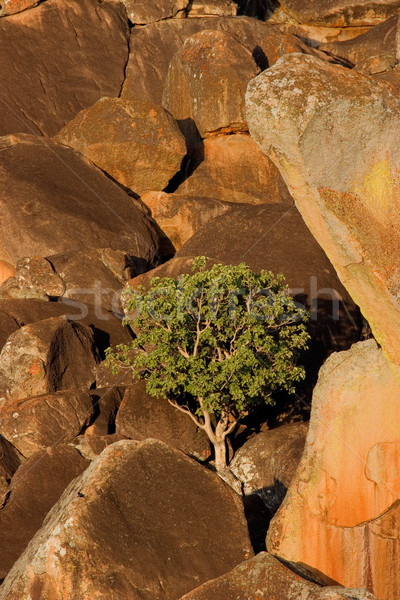 Granite rocks and tree Stock photo © EcoPic
