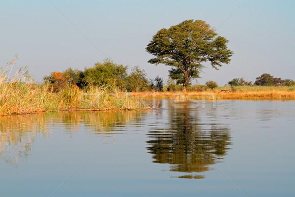 Boom reflectie afrikaanse landschap water rivier Stockfoto © EcoPic