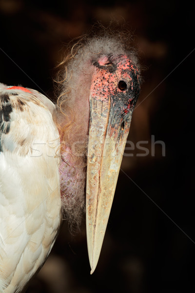 Cicogna ritratto Sudafrica occhi uccello african Foto d'archivio © EcoPic