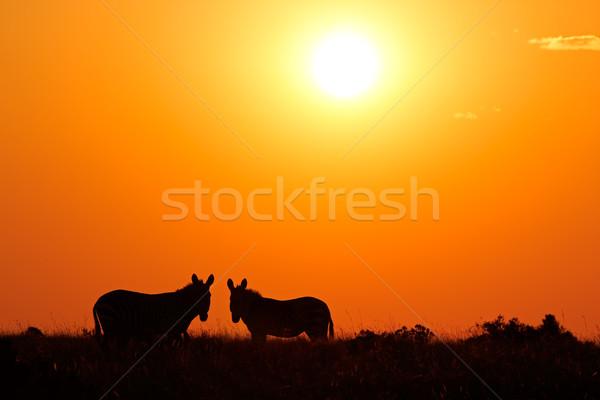 シマウマ シルエット 2 山 シマウマ 赤 ストックフォト © EcoPic