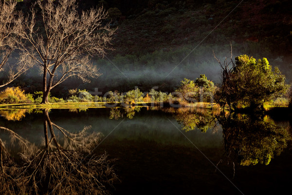 Scenic pond with  mist Stock photo © EcoPic