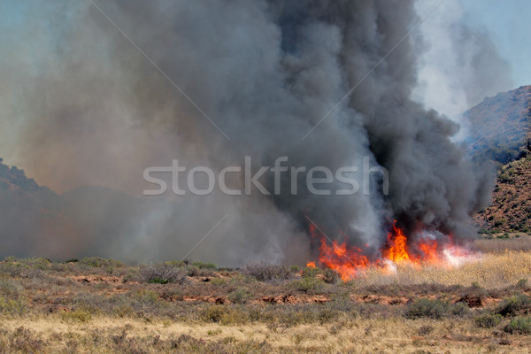 Brushfire Stock photo © EcoPic
