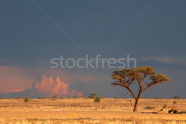Kalahari desert landscape Stock photo © EcoPic