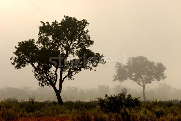 Trees in mist  Stock photo © EcoPic