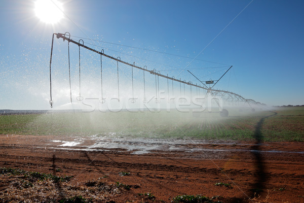 Pivot irrigation Stock photo © EcoPic