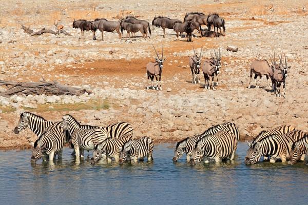 Etosha waterhole Stock photo © EcoPic
