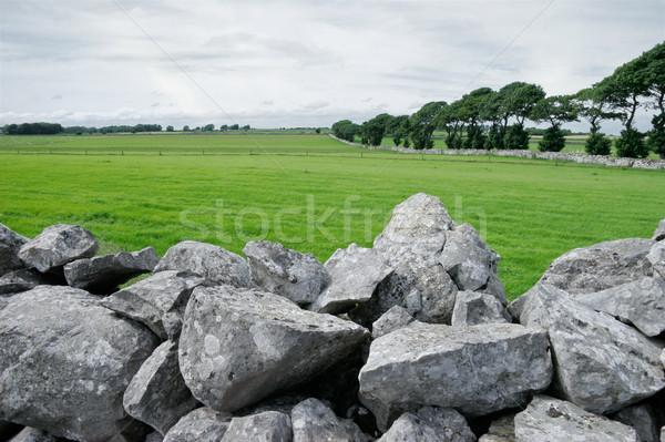 Kırsal İrlanda bereketli yeşil taş Stok fotoğraf © EcoPic