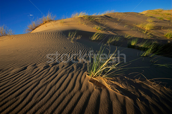 Grass and dune Stock photo © EcoPic