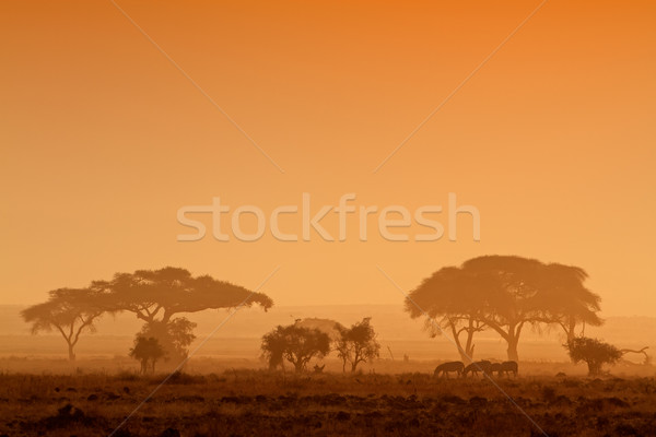 Sunset with silhouetted trees Stock photo © EcoPic
