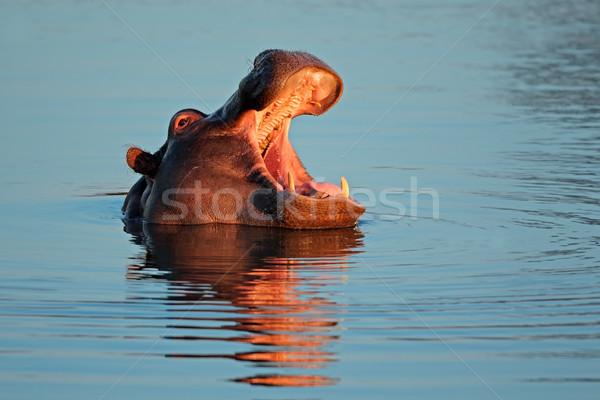 Suaygırı su açmak Güney Afrika Afrika nehir Stok fotoğraf © EcoPic