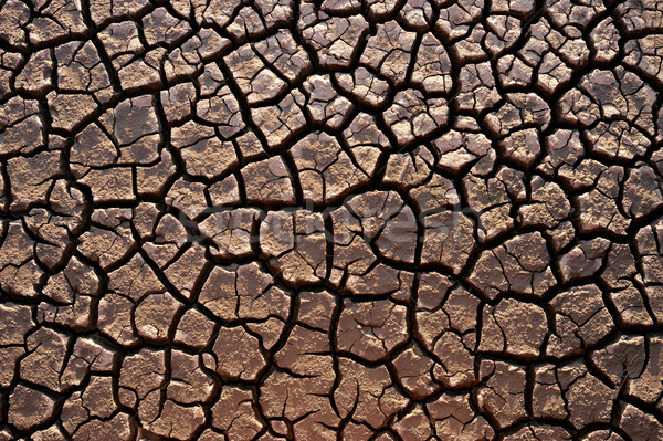 Parched land Stock photo © EcoPic