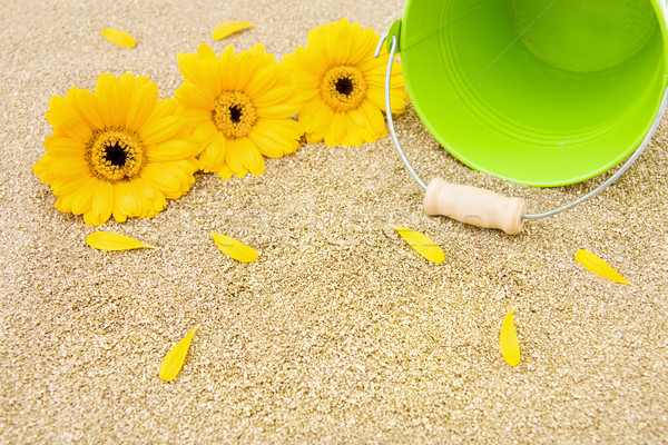 Stock photo: Golden sands, beautiful gerbera flowers and green bucket for summer holidays.