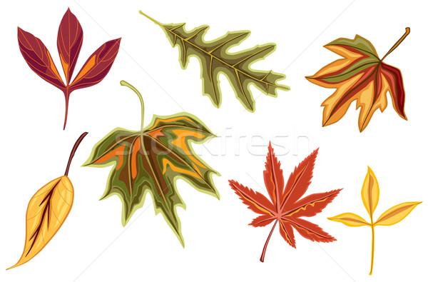 Outono cair folhas dourado isolado Foto stock © Eireann
