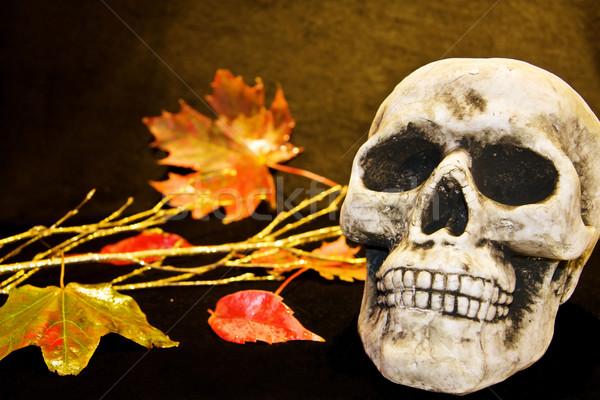 Scary Halloween Schädel menschlichen tot Stock foto © Eireann