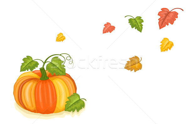Autumn freshly harvested pumpkin Stock photo © Eireann