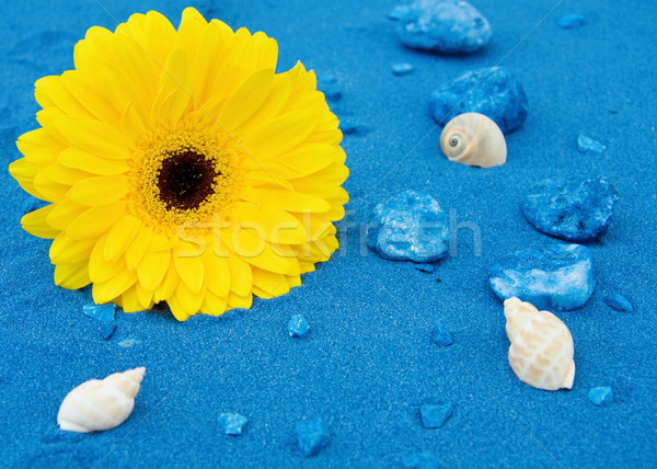 Stock photo: Summer fun at the beach