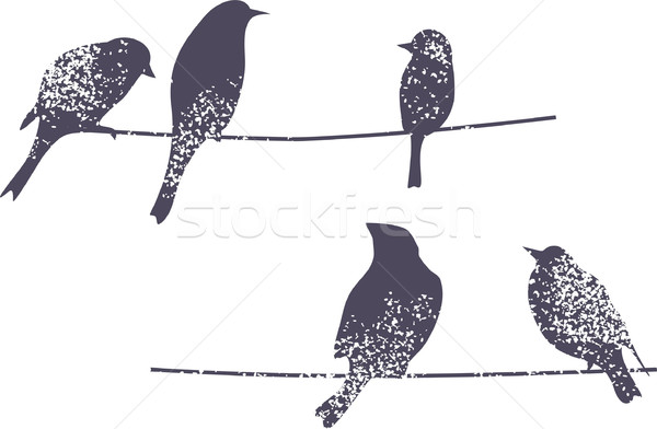 Birds silhouette. Stock photo © ekapanova
