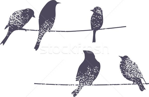 Ptaków sylwetka oddziału charakter Pióro zwierząt Zdjęcia stock © ekapanova