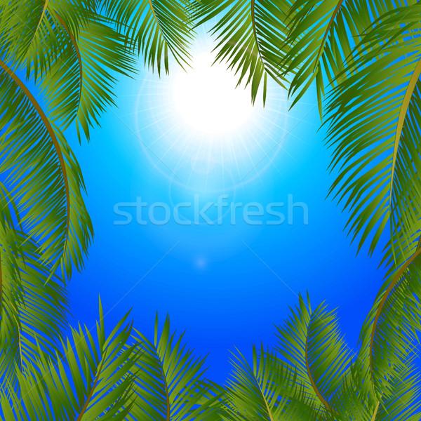 Tropicales palmiers cadre bleu ensoleillée ciel Photo stock © elaine
