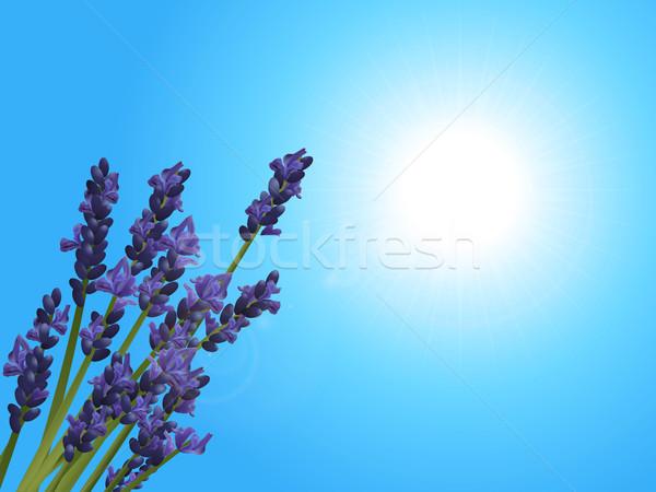 ラベンダー クローズアップ 晴れた 青空 3次元の図 ストックフォト © elaine