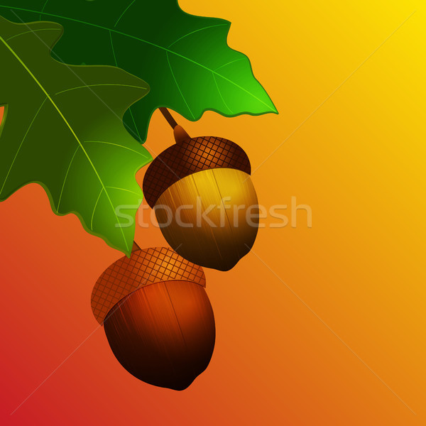 Autumn acorn with leafs on yellow and red background Stock photo © elaine