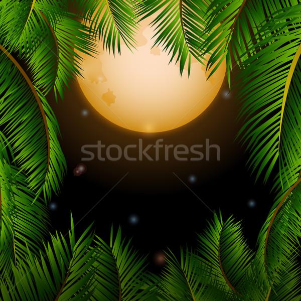 Grande tropicales luna palmeras cielo de la noche estrellas Foto stock © elaine