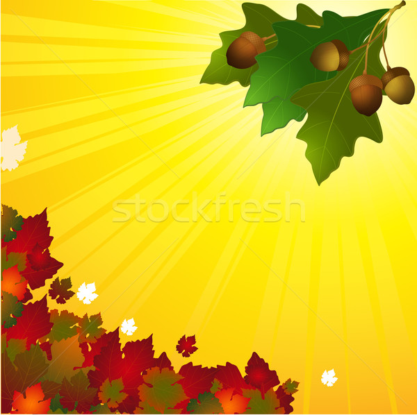 Autumn background with leafs and acorn Stock photo © elaine