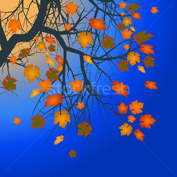 Invierno árbol marrón naranja profundo azul Foto stock © elaine