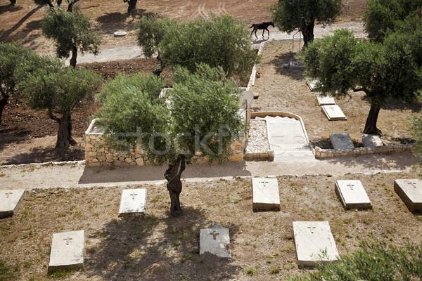 Azeitonas cristão cemitério pé Jerusalém Israel Foto stock © eldadcarin