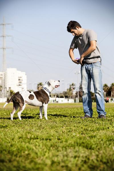 Pitbull kutya tulajdonos felfelé néz tart gumi Stock fotó © eldadcarin