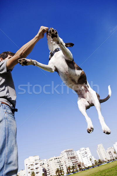 Dog Jumping for Food Stock photo © eldadcarin