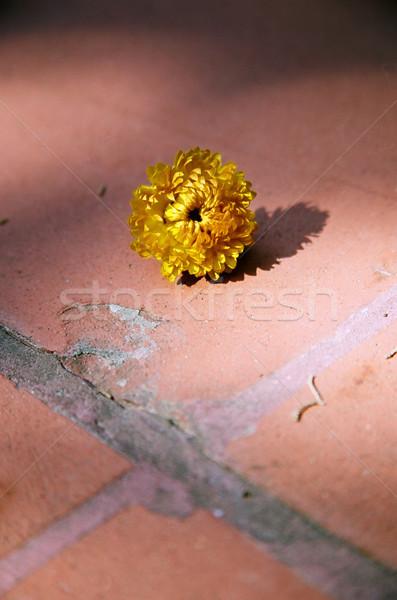 Dried Yellow Flower Stock photo © eldadcarin