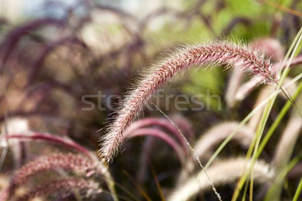 Campo erba fiore tutto natura Foto d'archivio © eldadcarin