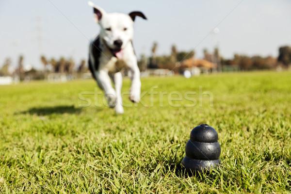 Fut kutya játék park fű monokróm Stock fotó © eldadcarin