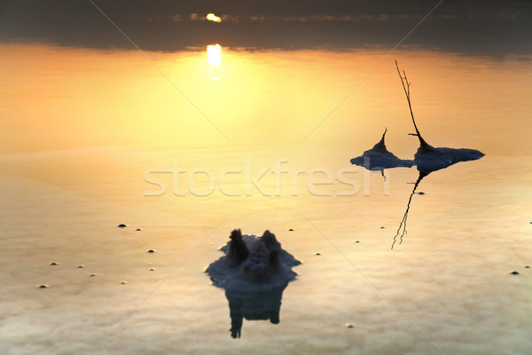 Stock foto: Salz · Morgengrauen · berühmt · Israel · Büsche
