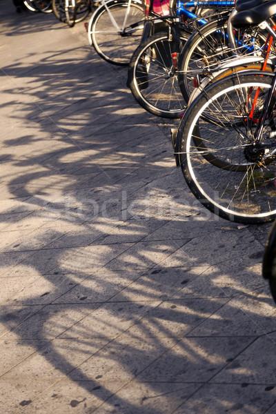 低い 太陽 ライト ストックフォト © eldadcarin