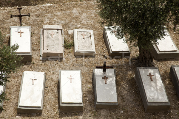 Foto stock: Azeitonas · cristão · cemitério · pé · Jerusalém · Israel
