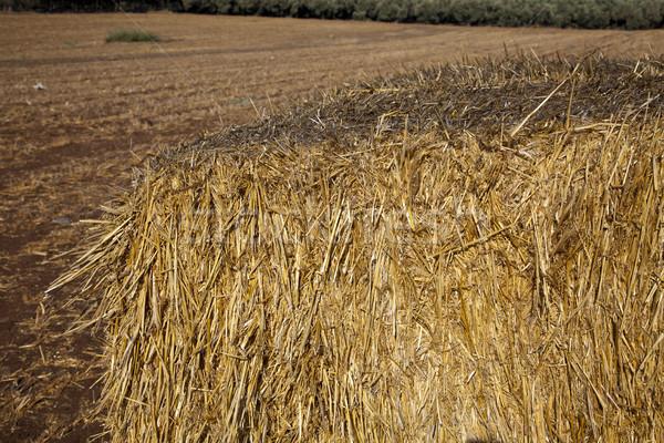 Baal hooi groot veld voedsel Stockfoto © eldadcarin