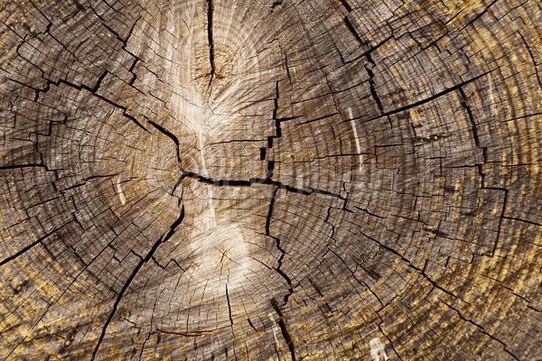 Tree Trunk Close Up Stock photo © eldadcarin