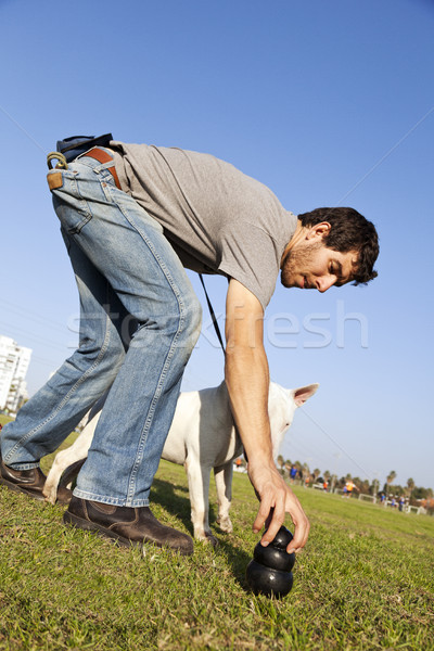 Trainer Placing Dog Chew Toy for Bull-Terier at Park Stock photo © eldadcarin
