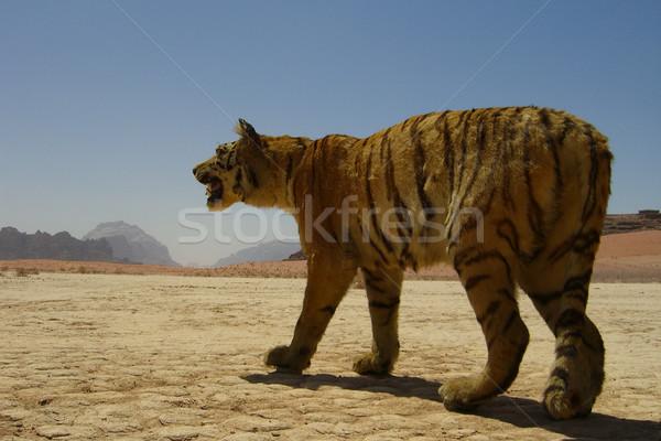 Bourré tigre désert Jordanie ciel montagne Photo stock © eldadcarin