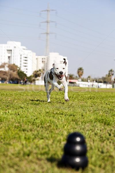 Homályos fekete kutya játék elöl keret Stock fotó © eldadcarin