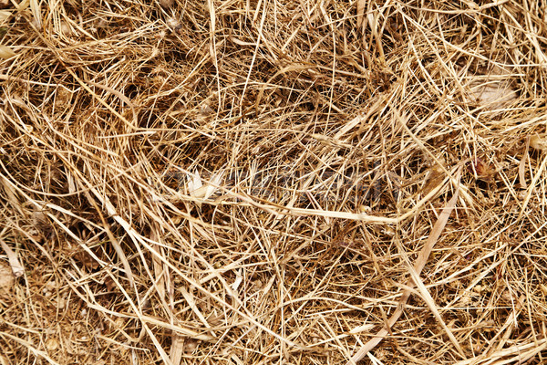 Dry Weeds Abstract Stock photo © eldadcarin