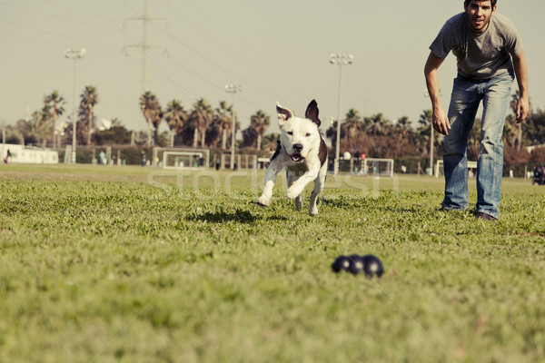 Pitbull Running after Dog Chew Toy Vintage Stock photo © eldadcarin