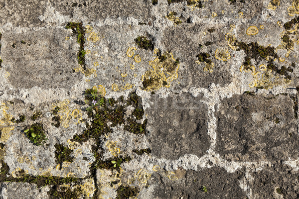 Antigua muro de piedra cubierto pared Foto stock © eldadcarin