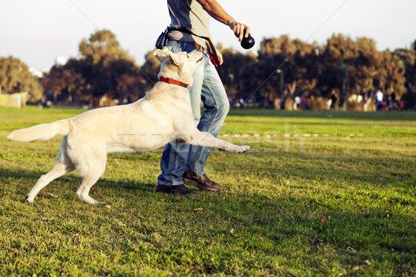 Labrador and Trainer with Dog Chew Toy at Park Stock photo © eldadcarin